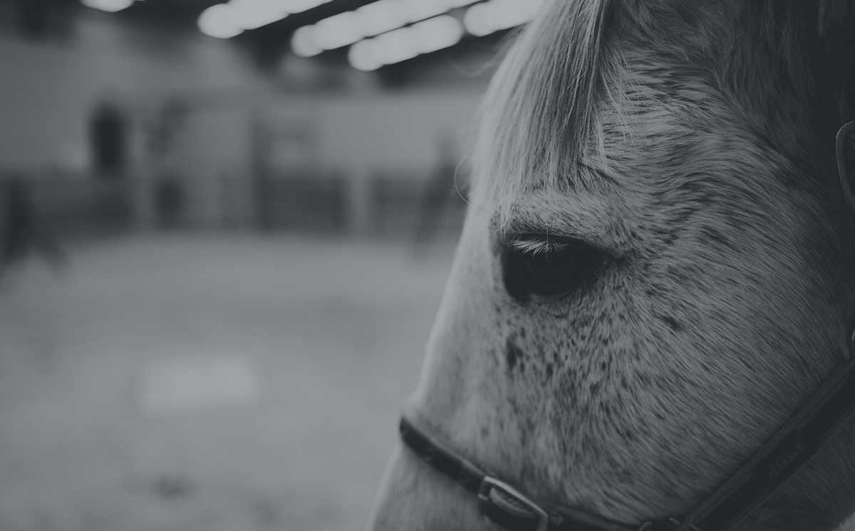 About New Zealand Equine Trust